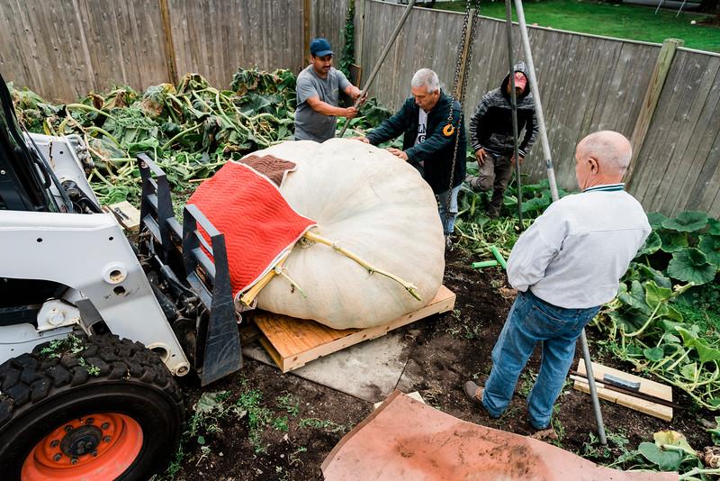 10 3 19 Swampscott giant pumpkin 5