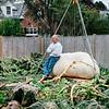 10 3 19 Swampscott giant pumpkin 10