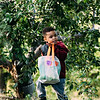 10 6 18 Peabody apple picking at Brooksby Farm 1