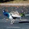 10 4 19 Bird standalones