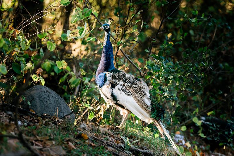 10 4 19 Bird standalones 2