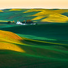 Palouse wheat fields in spring, green fields, dawn, morning light