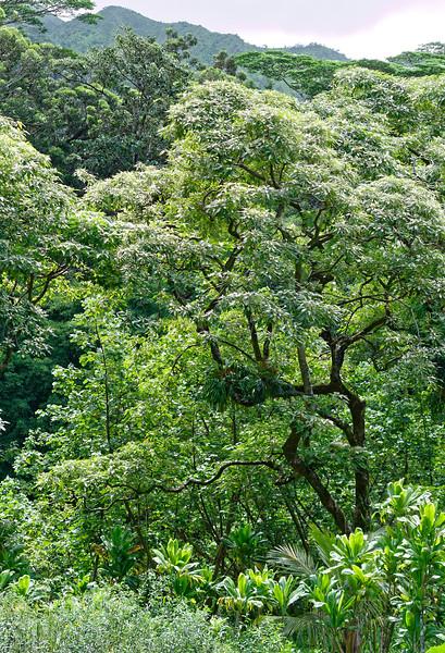 View within Lyon Arboretum
