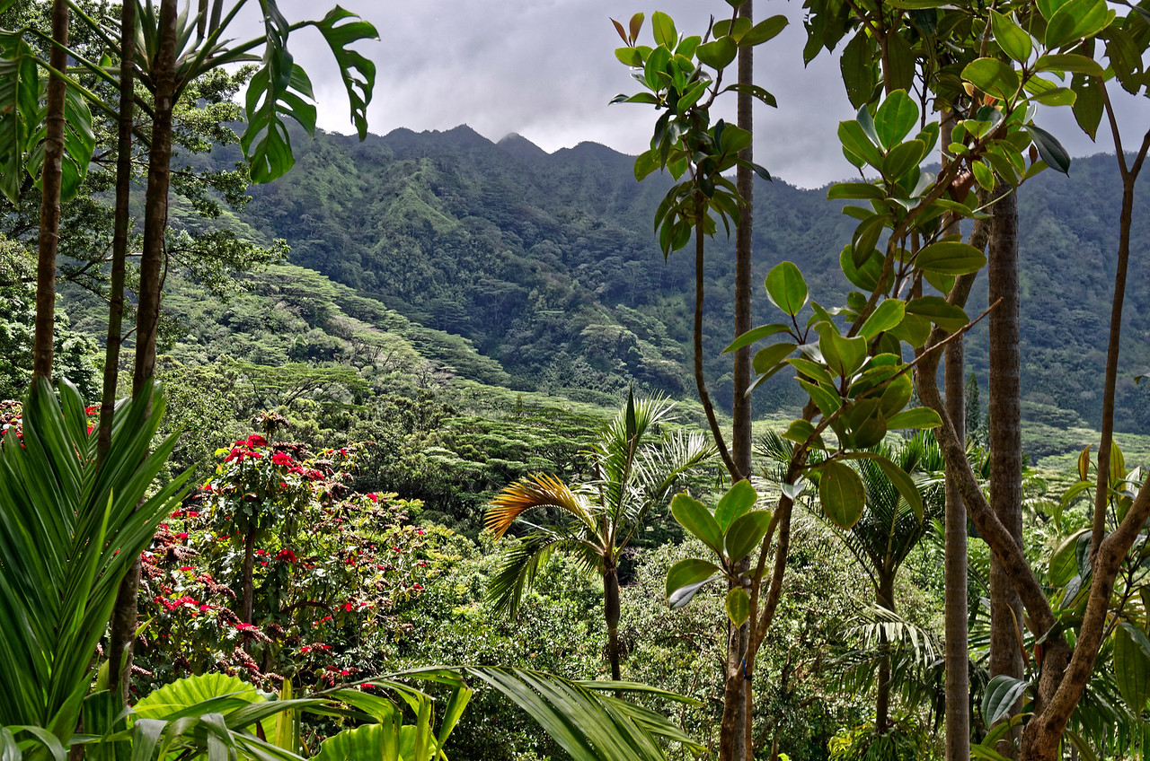 View through to the Ko'olau Mountains at the top of Manoa Valley