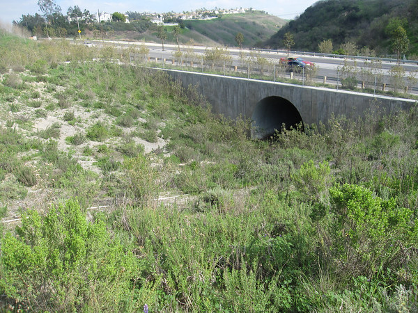"The Puente Hills Landfill Native Habitat Preservation Authority manages almost 4,000 acres of land in southern Los Angeles County.  This landmass, combined with other publicly protected lands in the Puente-Chino Hills area, is a biodiversity hotspot for a number of flora and fauna, even though it is less than 30 minutes by car from downtown L.A.  The land of the Habitat Authority is bisected by Harbor Boulevard, a 4-lane road that carries approximately 30,000 vehicles per day at speeds of up to 50 MPH (Gullo 2006).  A study by researchers at California State University-Fullerton found that the incidence of road kill on Harbor Boulevard was very high relative to a larger study area (Elliott & Stapp 2007).  Surveyed road kills have included coyotes, bobcats, and American badgers.  A wildlife underpass was constructed in 2006 to mitigate wildlife mortality due to vehicles on the corridor.<br /> <br /> The underpass received a $901,000 TE grant through the MTA award process and an additional $337,000 in TE funds from the statewide pool.<br /> <br /> Website: <a href=""http://www.habitatauthority.org/harborblvdunderpass.shtml"">http://www.habitatauthority.org/harborblvdunderpass.shtml</a><br /> <br /> References:<br /> <a href=""http://www.habitatauthority.org/pdf/Harbor_Blvd_Underpass.pdf"">http://www.habitatauthority.org/pdf/Harbor_Blvd_Underpass.pdf</a><br /> <a href=""http://repositories.cdlib.org/cgi/viewcontent.cgi?article=1376&context=jmie/roadeco"">http://repositories.cdlib.org/cgi/viewcontent.cgi?article=1376&context=jmie/roadeco</a>"