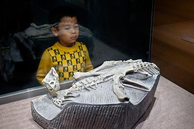 Dinosaur Museum, Zigong