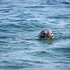 Seal Cruise