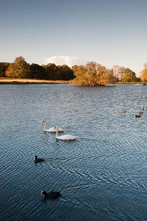 Richmond Park, Surrey, London, United Kingdom
