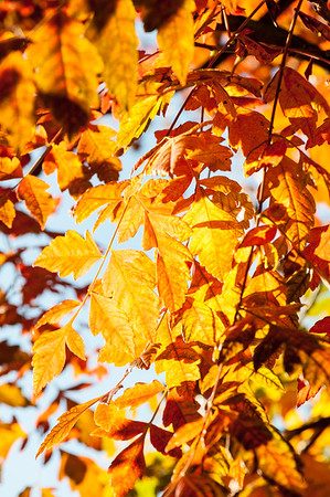 Leaves in autumn colours