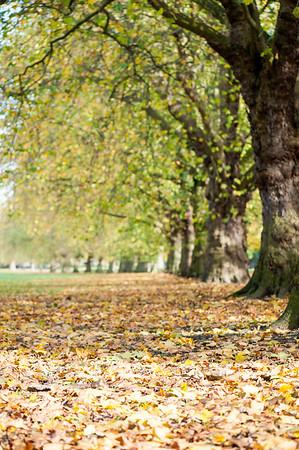 Victoria Park in autumn colours, London, United Kingdom