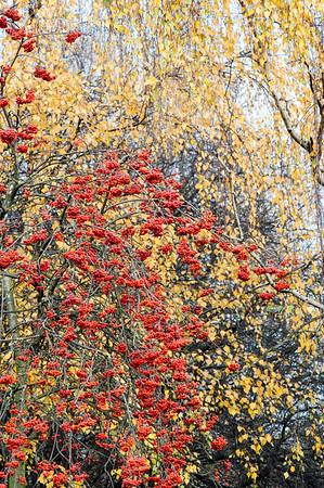 Victoria Park in autumn, Hackney, London, United Kingdom