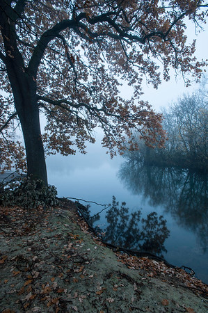 Foggy morning, Hollow Pond, Epping Forest, Leytonstone London, United Kingdom