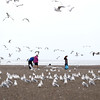 Jonathan Tressler — The News-Herald <br> A flock of seagulls takes flight at Headlands Beach State Park in Painesville Township Oct. 6 as volunteers from Lakeland Community College work in conjunction with the Alliance for the Great Lakes to collect and catalog trash strewn about the sand.