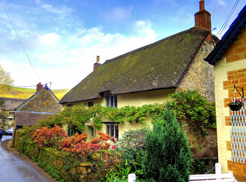 A pretty cottage in Stoke Abbott