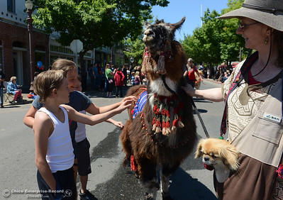 "Left to right, JT Higgs, 10, Savannah Higgs, 9, and Joseph Higgs, 7, all of Oroville, pet ""Pocahontas"" the llama as Yvonne Sumner leads the llama in a the Feather Fiesta Days parade Saturday, May 13, 2017, in downtown Oroville, California. (Dan Reidel -- Enterprise-Record)"