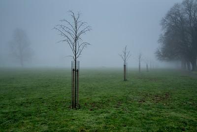 Ealing Common in fog, London, United Kingdom
