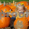 dnews_1011_Pumpkin_Picking_01