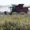 dnews_1013_Harvest_Pix_02