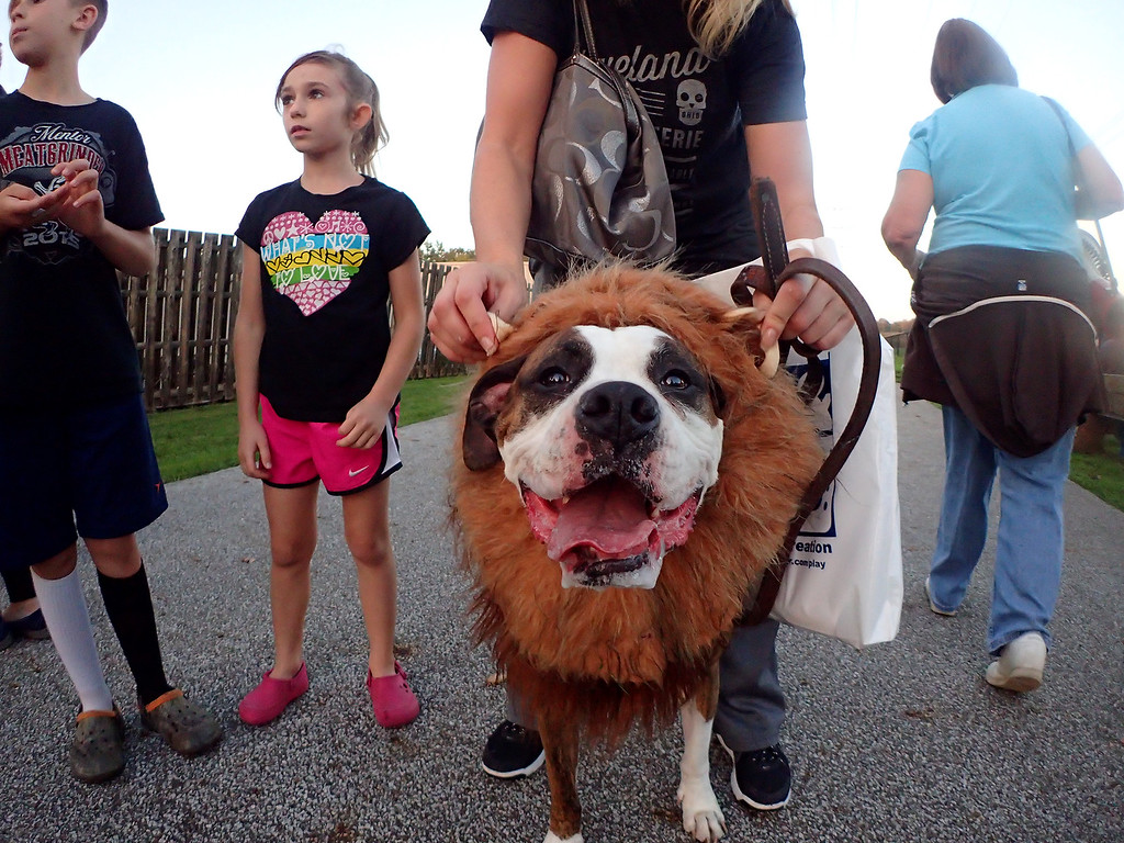 . Jonathan Tressler - The News-Herald. A scene from Mentor�s 10th Annual Howl-O-Ween Party for Dogs Oct. 13 at the Mentor Dog Park, 6645 Hopkins Road.