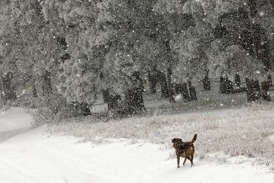 10/14/18 Beaulah snow