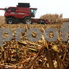 dnews_1015_Harvest_Pix_01