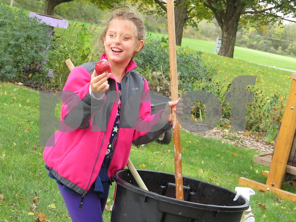 Sycamore resident Elle Rongere, 8, finds a small apple while washing a tub of them before they're made into cider Sunday during the Sycamore History Museum's Fall Festival.