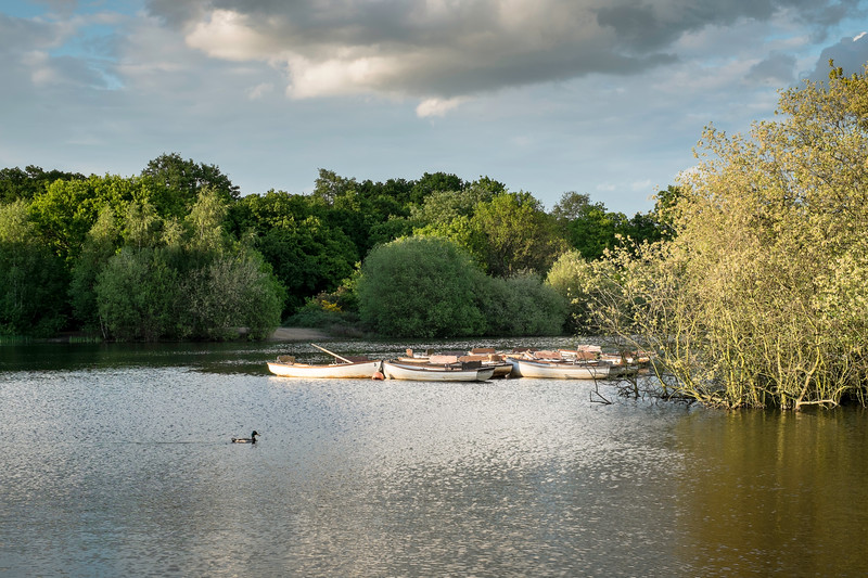 Hollow Pond, Epping Forest, London, United Kingdom