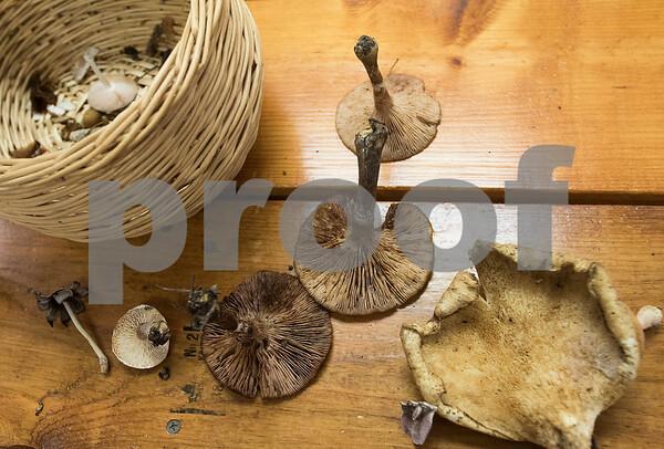 dnews_1018_Finding_Mushrooms_06