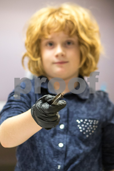 Sam Buckner for Shaw Media.<br /> Amelia Weingarz, 8, holds up a spider she is about to disect on Thursday October 8, 2017 at the Midwest Museum of Natural History.