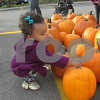 Mia Sykes, 1, of Sycamore tries to pick a pumpkin during Denis and Jill Jagodzinski's annual pumpkin giveaway Saturday in downtown Sycamore. The Jagodzinskis buy all of the pumpkins from Theis Farm Market in Maple Park and give them away to the community.