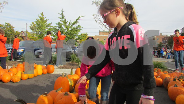 Ashlyn Fredrickson (bending down), 9, of Cortland and Jozlyn Baird, 9, of Cortland look at pumpkins during Denis and Jill Jagodzinski's annual pumpkin giveaway Saturday in downtown Sycamore.