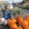 Logan Jones, 9, of Sycamore chooses a pumpkin during Denis and Jill Jagodzinski's annual pumpkin giveaway Saturday in downtown Sycamore.