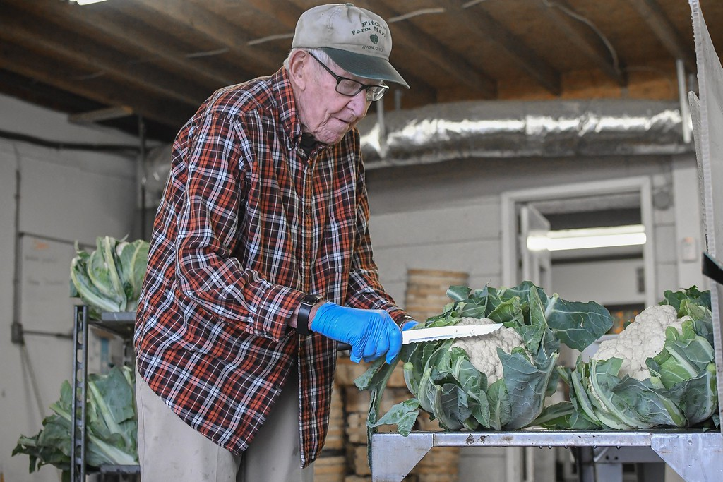 . Robert Fitch trims the leaves from a head of cauliflower, while working at his family farm located at 4413 Center Road, Avon, Oct. 11, 2017. (Eric Bonzar�The Morning Journal)
