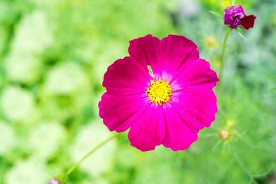 Flower, Osiny, Poland