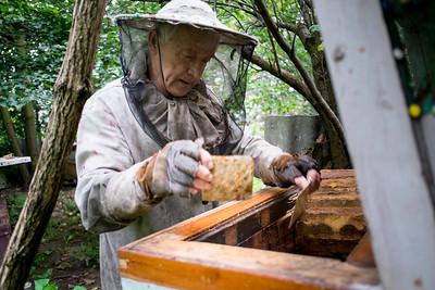 Man attending bees, Osiny, Poland