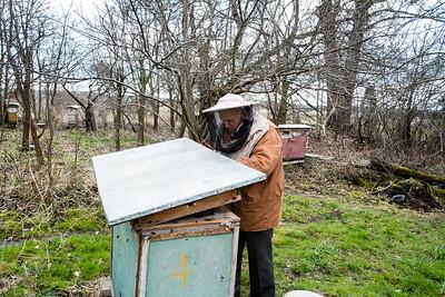 Rural apiary, Osiny, Poland