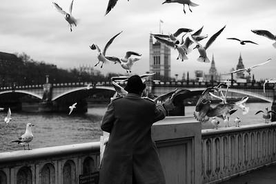 Man feeding peagons by Lambeth Bridge, London, United Kingdom