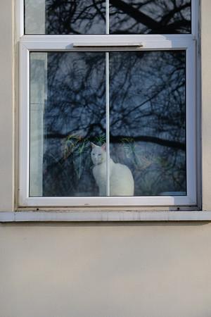 Cat in a window, London, United Kingdom