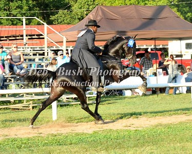 CLASS 10 OPEN 3 & 4 YR OLD RACKING  AD TC