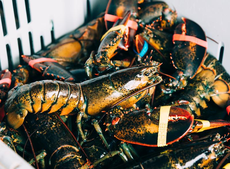 01945 Winter18 Lobstermen 9