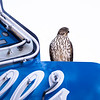 11 23 18 Lynn bird of prey 1