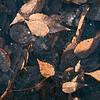 Lynn frozen leaves
