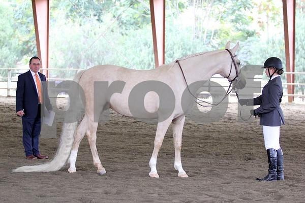 11-5-17 San Diego Arabian Horse Association