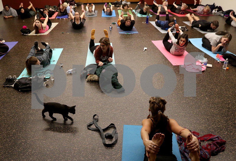 dnews_1108_Cat_Yoga_04