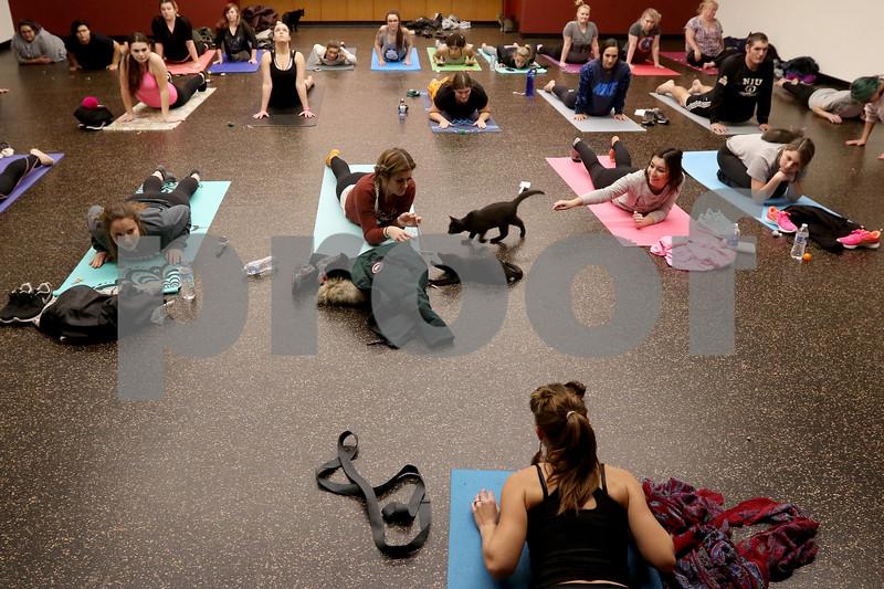 dnews_1108_Cat_Yoga_14