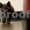 dnews_1108_Cat_Yoga_05