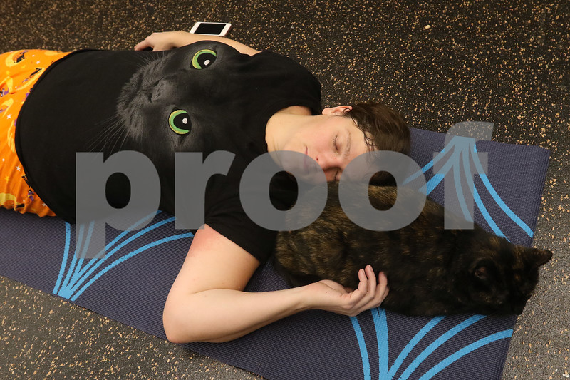 dnews_1108_Cat_Yoga_03