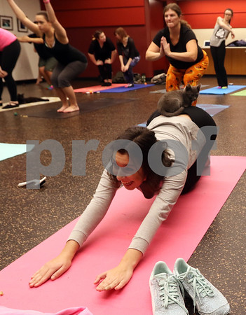 dnews_1108_Cat_Yoga_09