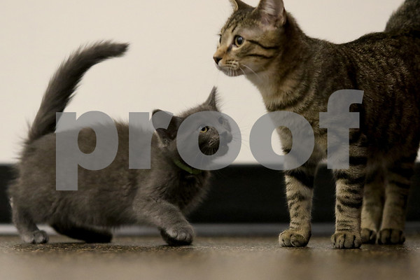 dnews_1108_Cat_Yoga_10
