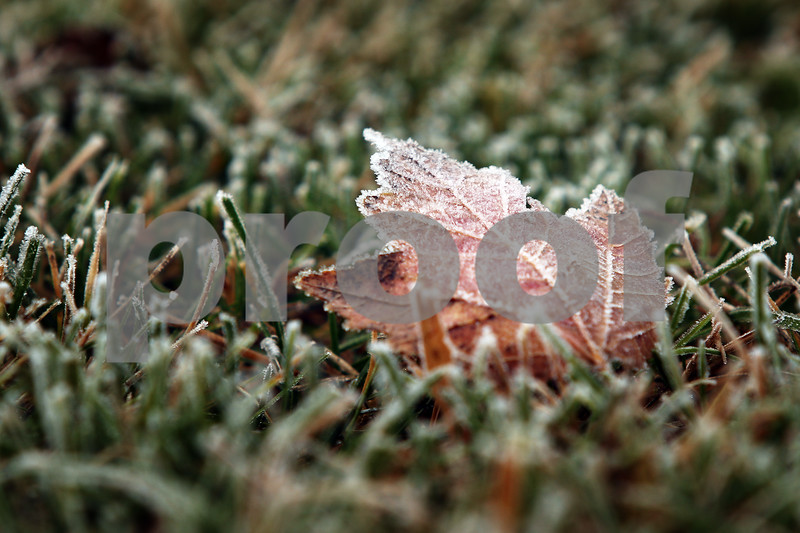 dnews_1113_Frost_Standalone